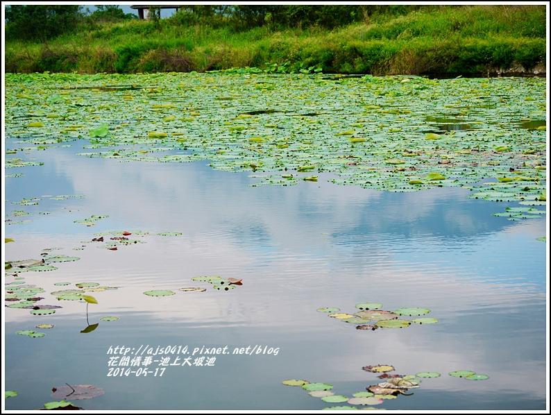 2014-05-池上大坡池30.jpg