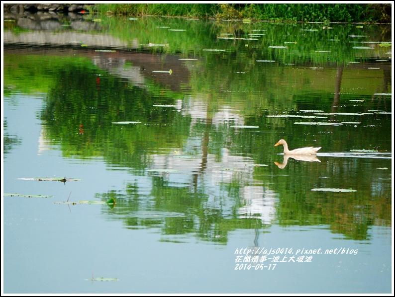 2014-05-池上大坡池43.jpg