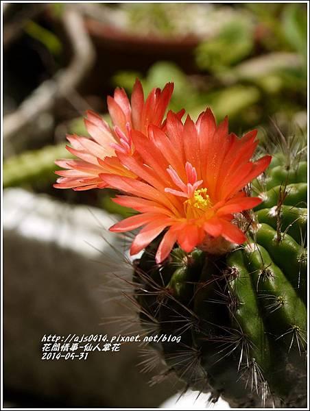 2014-04-仙人掌花2.jpg