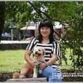 2014-06-阿勃勒(瑞穗自行車道)31.jpg