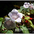 2014-06-大岩桐4.jpg