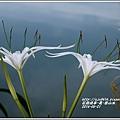 2014-06-夏-雲山水8.jpg
