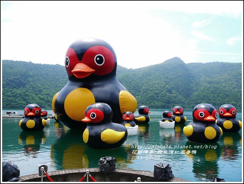 2014-07-鯉魚潭紅面番鴨5.jpg