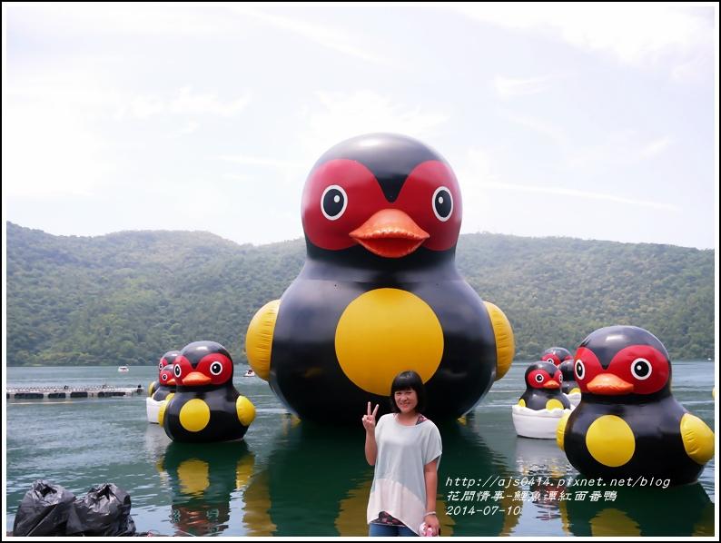 2014-07-鯉魚潭紅面番鴨6.jpg