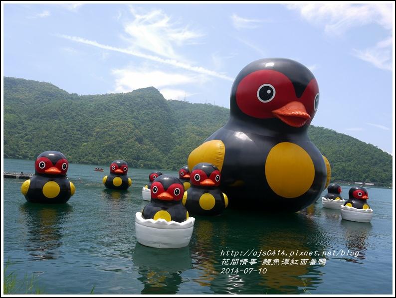 2014-07-鯉魚潭紅面番鴨9.jpg