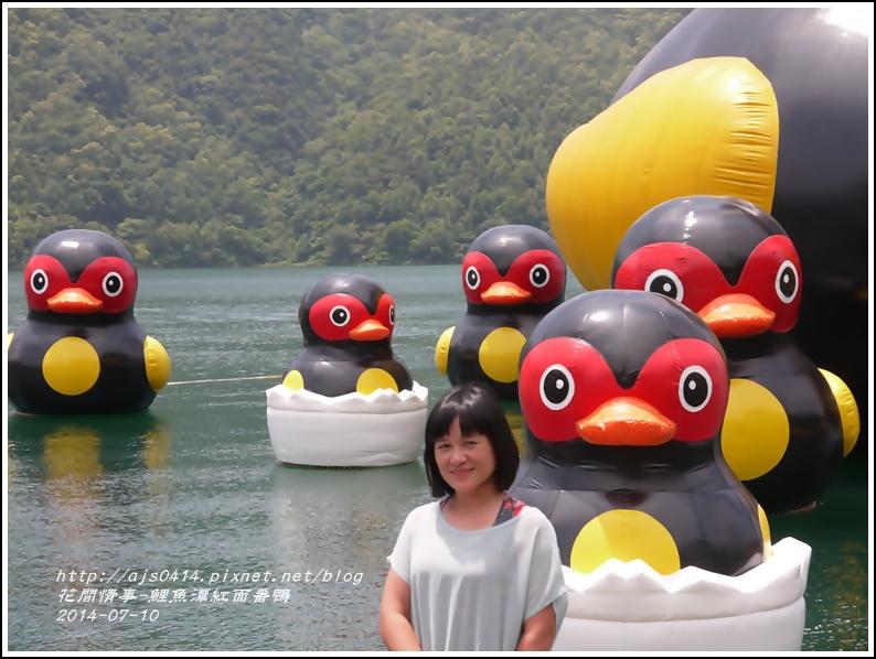 2014-07-鯉魚潭紅面番鴨13.jpg