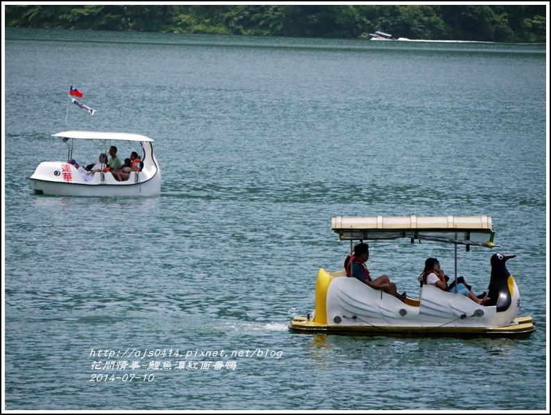 2014-07-鯉魚潭紅面番鴨24.jpg