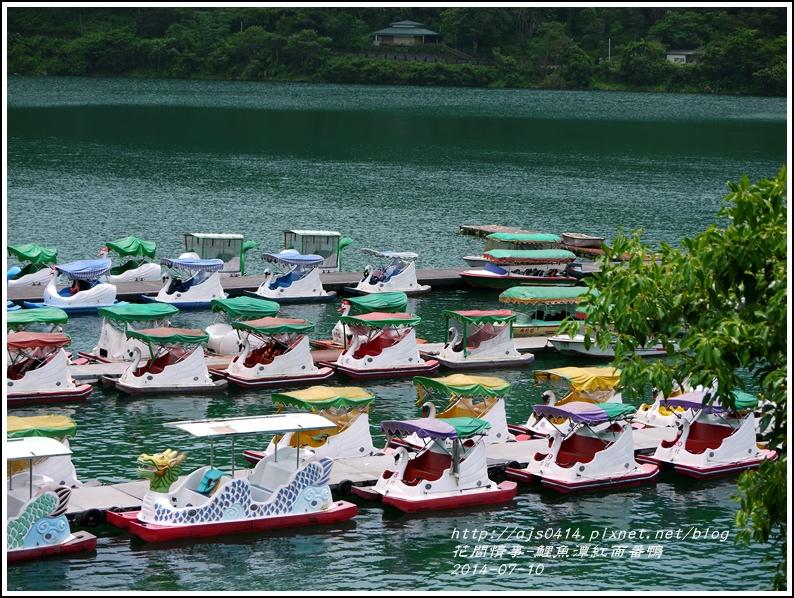 2014-07-鯉魚潭紅面番鴨25.jpg