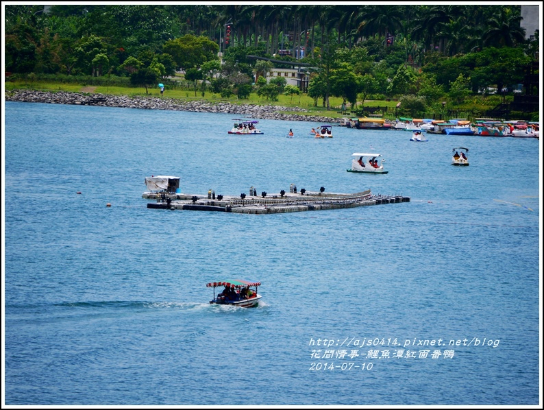 2014-07-鯉魚潭紅面番鴨32.jpg