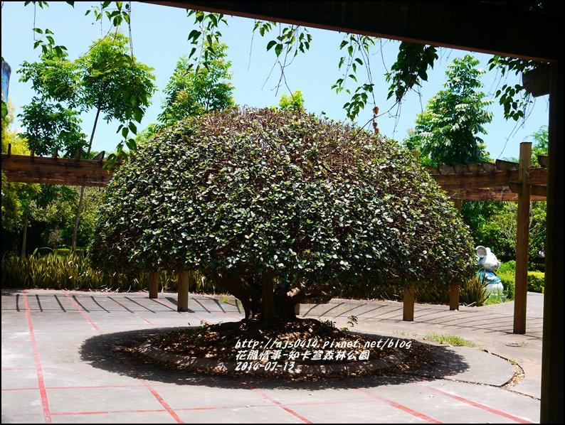 2014-07-知卡宣森林公園24.jpg