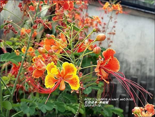 2014-07-黃蝴蝶2.jpg