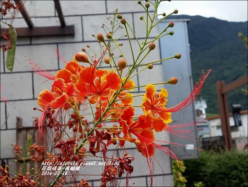 2014-07-黃蝴蝶5.jpg