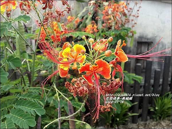 2014-07-黃蝴蝶4.jpg
