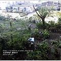 希望之樹鳳凰木2.jpg