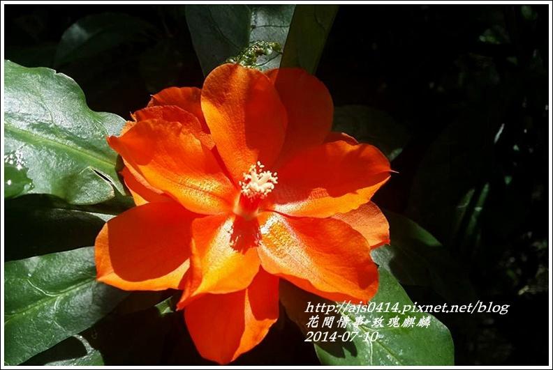 2014-08-玫瑰麒麟1.jpg