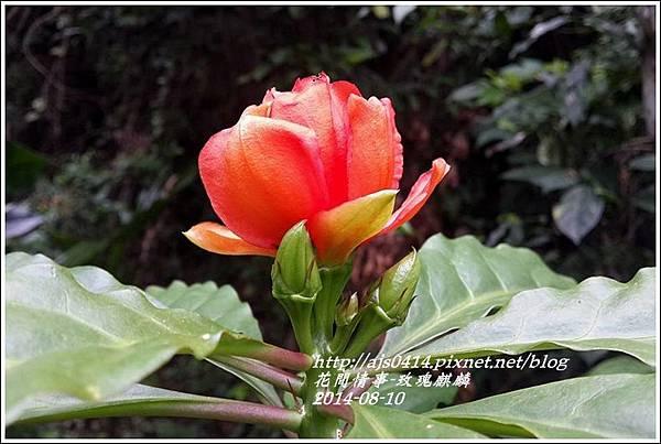 2014-08-玫瑰麒麟5.jpg