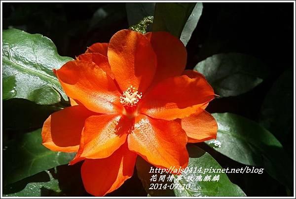 2014-08-玫瑰麒麟2.jpg