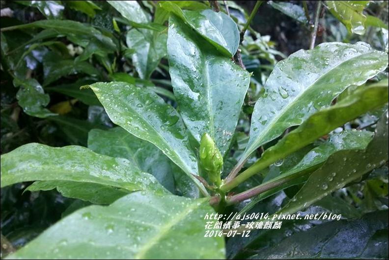 2014-08-玫瑰麒麟7.jpg