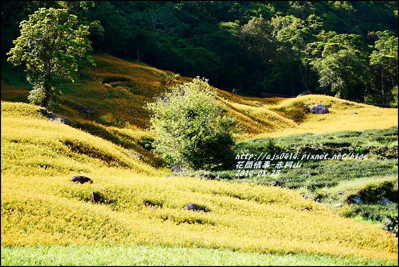 2014赤柯山金針花海39.jpg