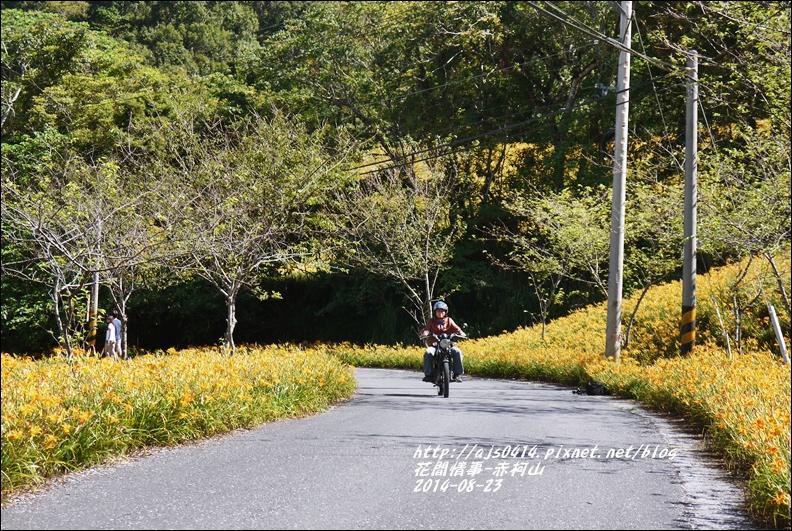2014赤柯山金針花海59.jpg