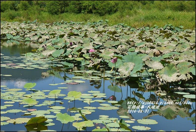 2014-09-池上大坡池7.jpg