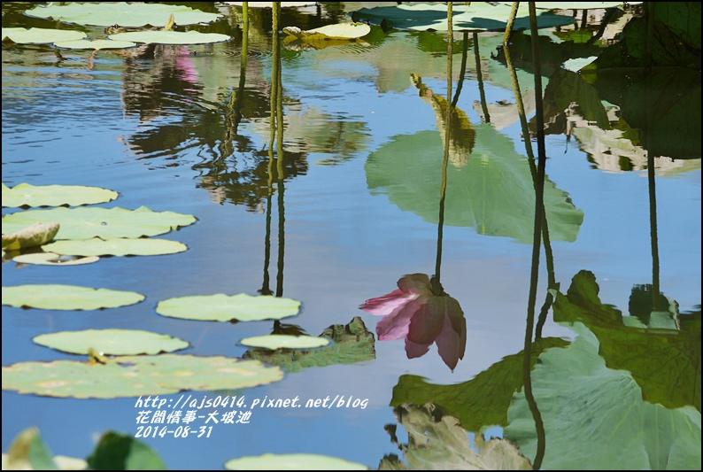 2014-09-池上大坡池8.jpg