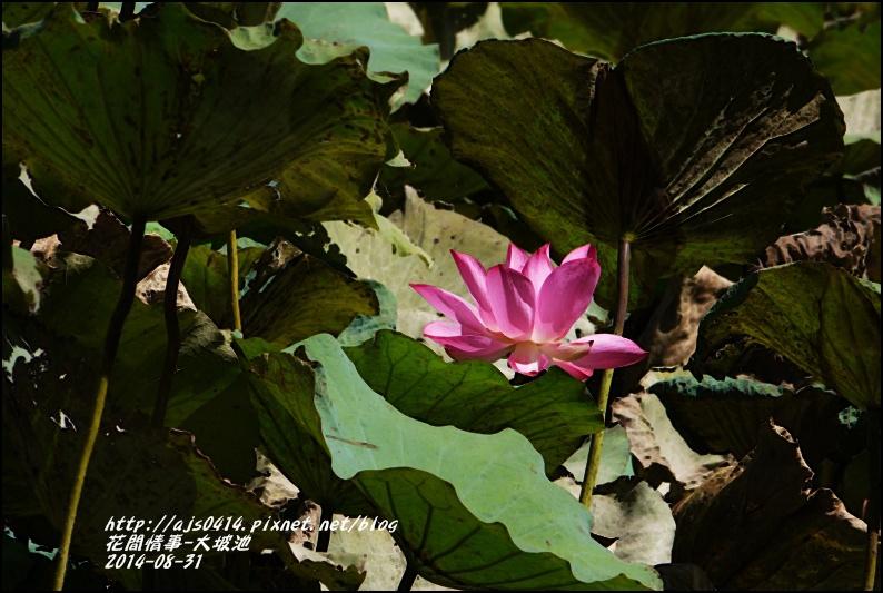 2014-09-池上大坡池10.jpg