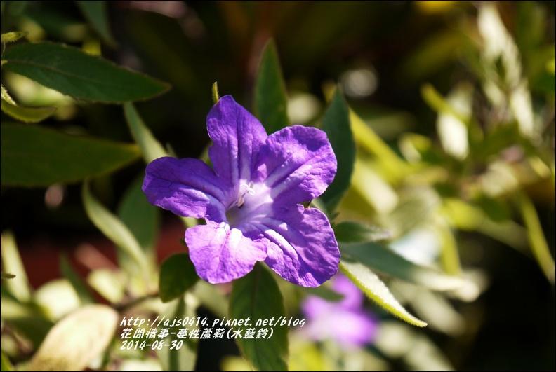 2014-09-蔓性蘆莉2.jpg