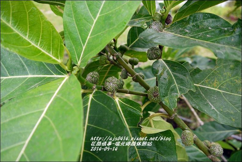 2014-09-瑞北鄉間休息站12.jpg