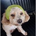 小Q柚帽1.jpg