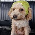 小Q柚帽2.jpg