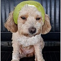小Q柚帽4.jpg