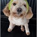 小Q柚帽3.jpg
