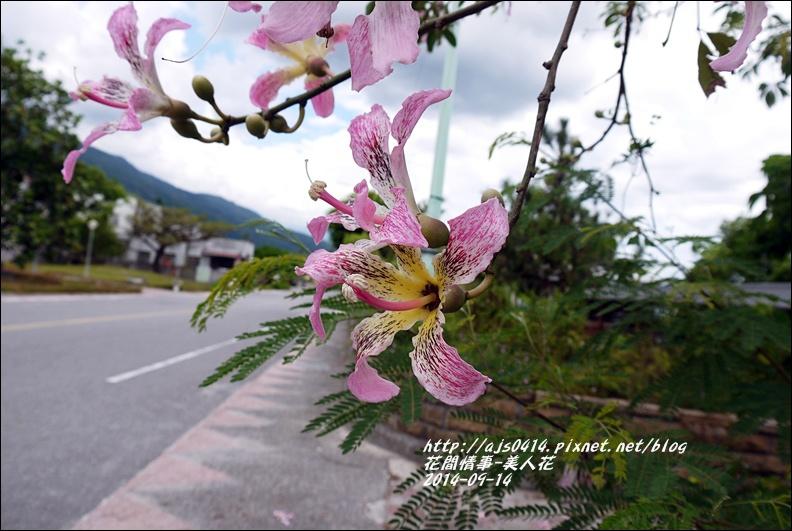 2014-09-美人花1.jpg