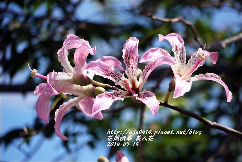 2014-09-美人花5.jpg