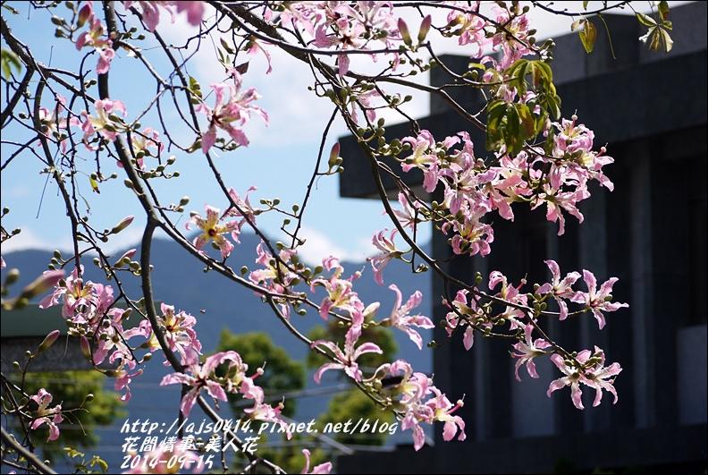 2014-09-美人花8.jpg
