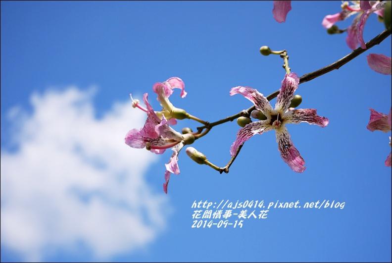 2014-09-美人花10.jpg
