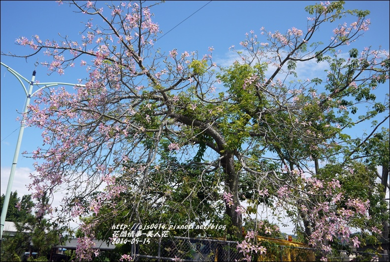 2014-09-美人花11.jpg
