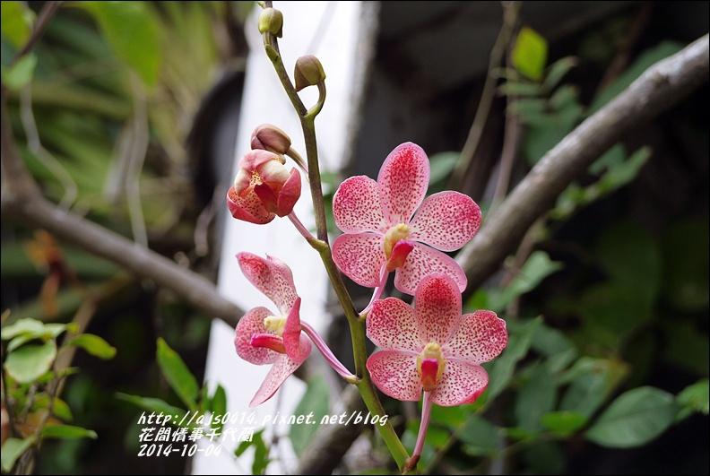 2014-10-千代蘭2.jpg