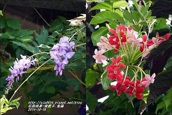 2014-10-紫藤&使君子.jpg