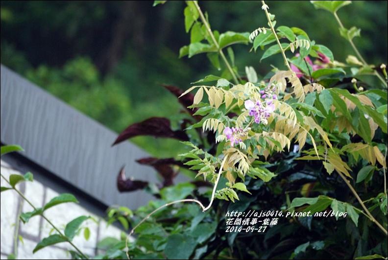 2014-10-紫藤4.jpg
