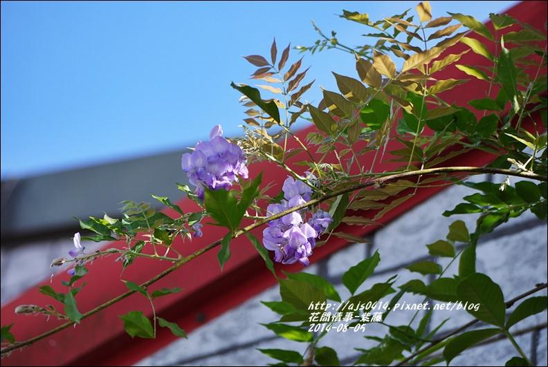 2014-10-紫藤3.jpg