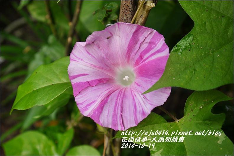 2014-10-大雨朝顏會5.jpg