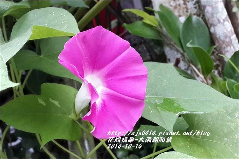 2014-10-大雨朝顏會7.jpg