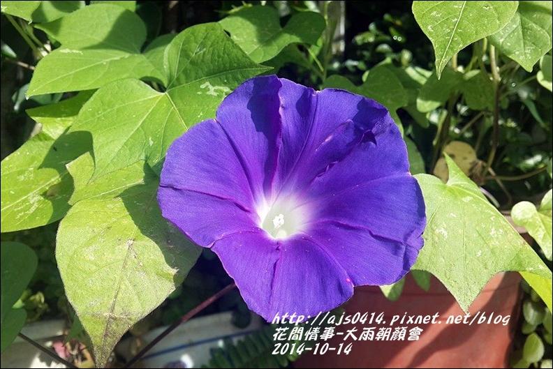 2014-10-大雨朝顏會8.jpg