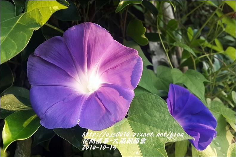 2014-10-大雨朝顏會10.jpg