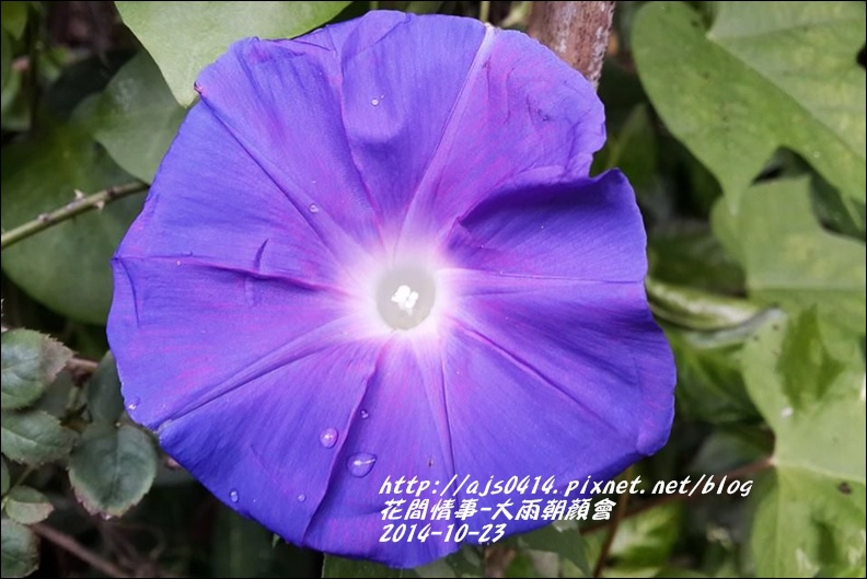 2014-10-大雨朝顏會12.jpg