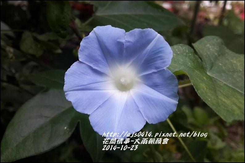 2014-10-大雨朝顏會13.jpg