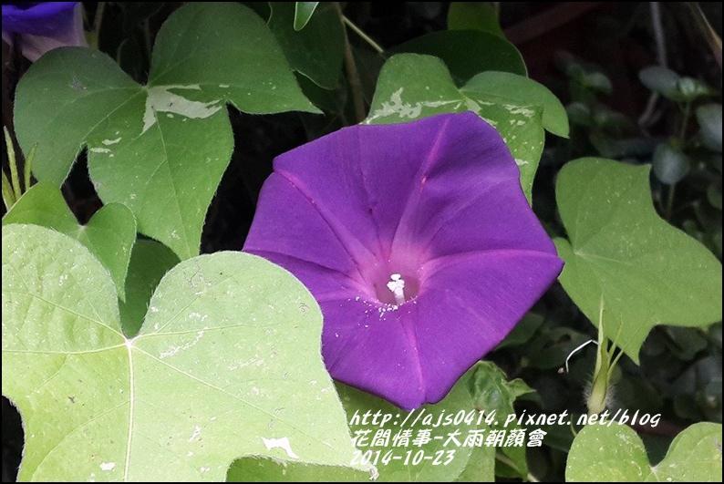 2014-10-大雨朝顏會14.jpg