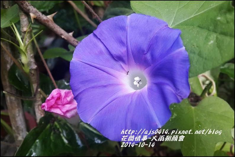 2014-10-大雨朝顏會16.jpg
